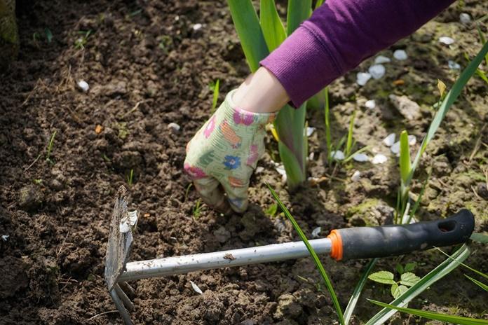 Pavasario darbai darže tęsiasi: 5 svarbiausi patarimai